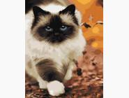 Коты и собаки: картины без коробки Белый пушистик