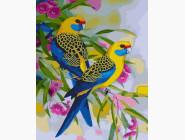 Птицы и бабочки: картины без коробки Попугайчики на воле