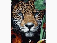 Животные: картины без коробки Хищник