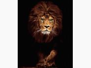 Животные: картины без коробки Царь зверей