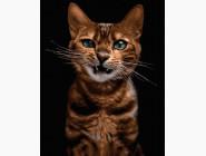 Коты и собаки: картины без коробки Рёв зверя