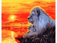 Львы на закате