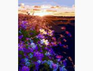 Восход солнца на цветочном поле
