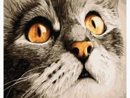 Коты и собаки Взгляд кота Сирка