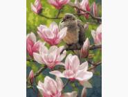Птицы и бабочки картины по номерам Птицы и цветы