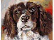 Коты и собаки картины по номерам Портрет лучшего друга
