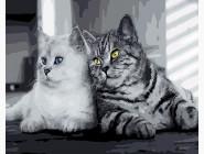 Кошачья парочка