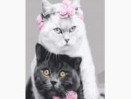 Белая кошка, черный кот