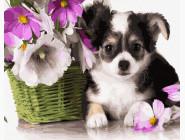 Коты и собаки картины по номерам Маленький любимчик