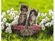 Коты и собаки картины по номерам Котята в корзине