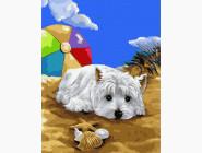 Коты и собаки картины по номерам Болонка на пляже