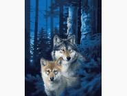 Животные и рыбки Ночные волки