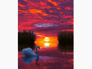 Лебедь на закате