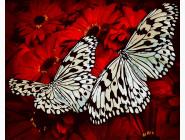 Бабочки на герберах