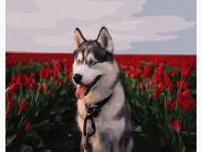 Коты и собаки Хаски в тюльпановом поле