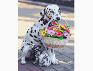 Коты и собаки картины по номерам Далматинец с цветами