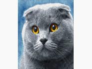 Коты и собаки картины по номерам Вислоухий шотландец