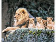 Животные и рыбки Лев и потомство
