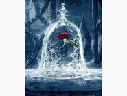 Цветы, натюрморты, букеты Зимняя роза