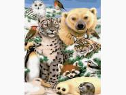 Животные холода