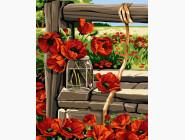 Цветы, натюрморты, букеты Полевые маки