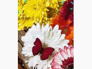 Цветы, натюрморты, букеты Бабочка на герберах