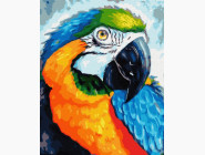 Птицы и бабочки картины по номерам Красочный попугай