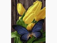 Цветы, натюрморты, букеты Бабочка на тюльпанах