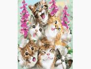 Коты и собаки картины по номерам Милые котята
