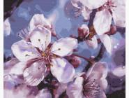 Цветы, натюрморты, букеты Вишневый цвет