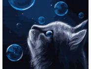 Коты и собаки картины по номерам Кот и удивительные пузырьки