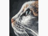 Коты и собаки Взгляд кошки