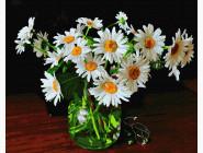 Цветы, натюрморты, букеты Ромашки в банке