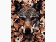 Животные и рыбки Волчий взгляд
