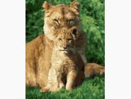 Животные и рыбки Львёнок под защитой