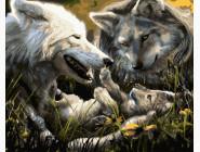 Животные и рыбки Семья волков