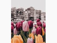 картина по номерам Цветы Амстердама