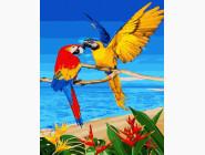 Птицы и бабочки картины по номерам Попугаи на пляже