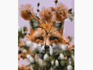 Животные и рыбки Взгляд лисицы
