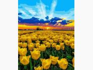 Пейзаж и природа Рассвет над тюльпановым полем