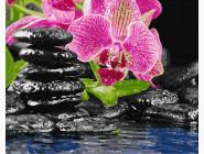 Цветы, натюрморты, букеты Цветок и камни