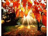 Рассвет в осеннем парке