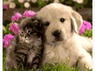 Котенок и щенок лабрадора