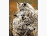 Животные и рыбки Волчья нежность