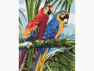 Птицы и бабочки: картины без коробки Яркие ара