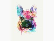 Коты и собаки: картины без коробки Красочный бульдог