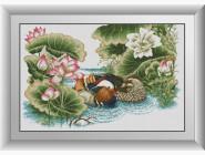 Птицы и павлины Утки на реке