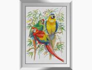 Три попугая