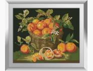 Натюрморт, фрукты и овощи Апельсины