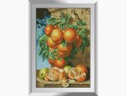 Натюрморт, фрукты и овощи Ветка апельсинов